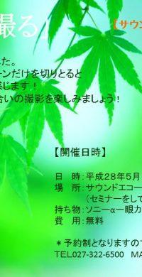 H28.5.14 新緑を撮る1